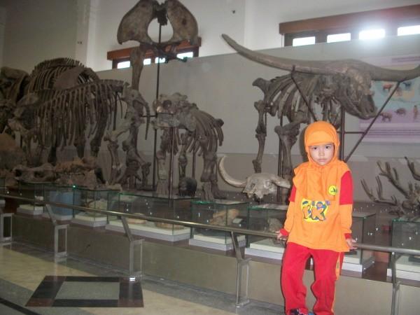 fosil kerbau purba di Museum Geologi, Bandung