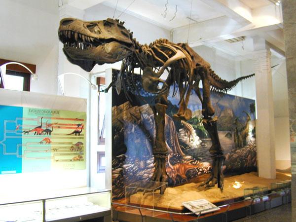 Kerangka tiruan T-Rex di Museum Geologi Bandung