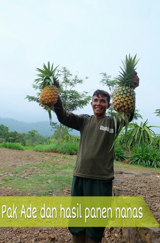 Hasil Panen Kebun Agroindustri Dompet Dhuafa Cijambe